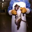 apenhandel