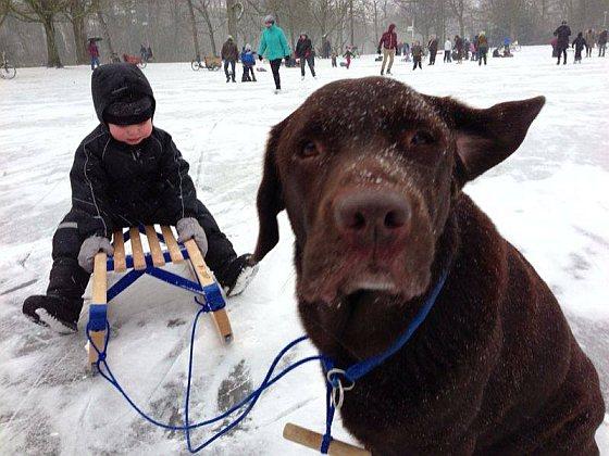 Labrador Simon doodgereden