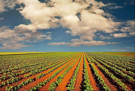 Landbouw - bodem