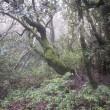 Nationaal park Garajonay bedreigt door ernstige bosbranden