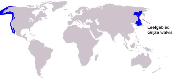Leefgebied Grijze walvis