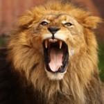 Brullende leeuw