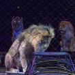 Steeds meer Spaanse gemeenten tegen circussen met dieren