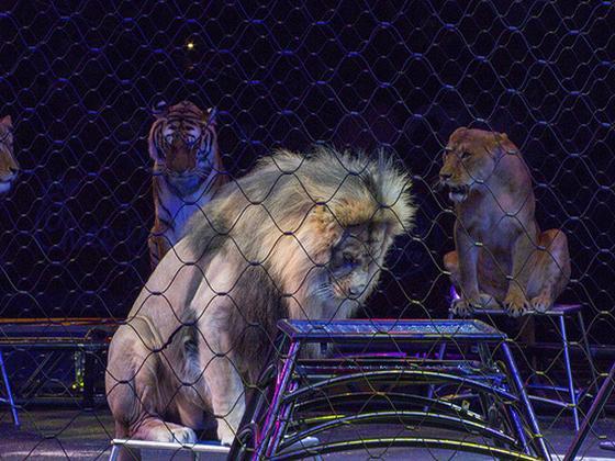 gemeenten tegen circussen