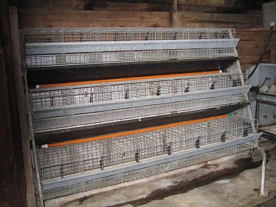 Lege konijnenbatterij