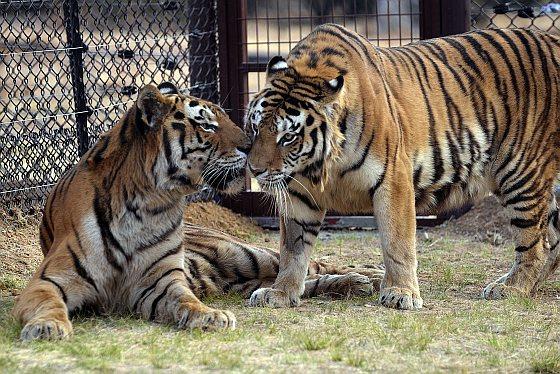 Lina en Harun in hun nieuwe verblijf in Lionsrock - dierentuin
