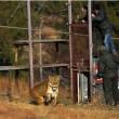 #GNvdD: Nederlandse leeuwen eindelijk in Afrika