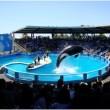 Orka Lolita zwemt al 45 jaar rond in het allerkleinste bassin (video)