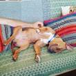 Lonneke Engel: Pitbull gevaarlijkste hond?