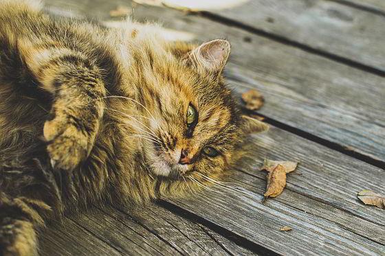 Luierende kat