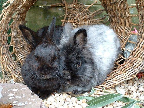 Maatje - konijnen