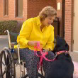 #GNvdD: Hond helpt gewond baasje naar een telefoon