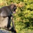 India verhoogt geldprijs voor doden apen