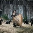 Stierenvechten geen cultureel erfgoed!