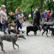 500 honden in mars tegen hondenleed Spanje