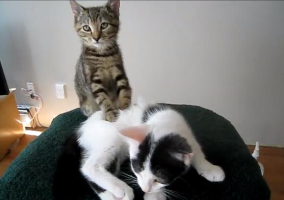 masserende kittens