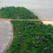 Ontbossing Amazoneregio Brazilië bereikt dieptepunt
