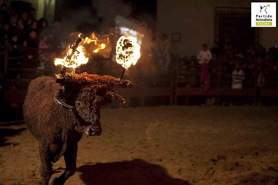 Medinaceli - vuurstier - toro jubilo