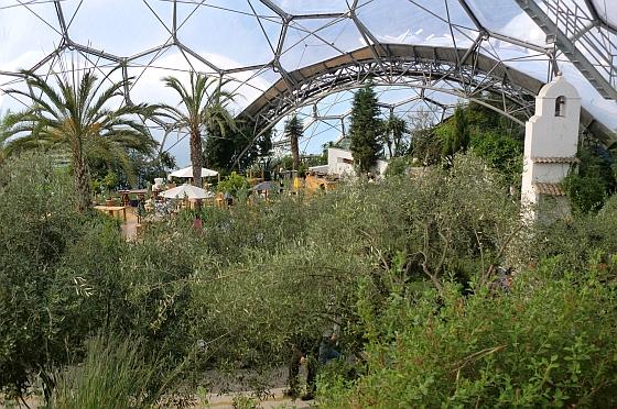 Mediterranean Biome