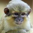 Dode aap in koelkast aangetroffen
