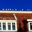 Meeuwenoverlast aangepakt met neproofvogels