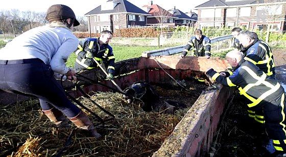 Dordts meisje redt paard uit mestbak