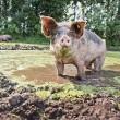 Wakker Dier: De mooiste modderpoel van 2013 ligt in Ruurlo