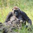 Moeder Malui met tweeling   Foto: WWF, Nick Radford