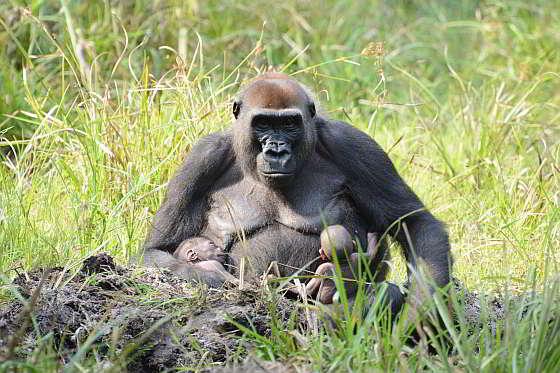 Moeder Malui met tweeling | Foto: WWF, Nick Radford