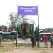 #GNvdD: Aziatische olifant Mohan eindelijk vrij