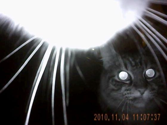 Kat 's nachts