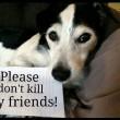 #GNvdD: Wetsvoorstel Zuid-Korea verbiedt hondenboerderijen