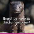 Glorieuze overwinning voor de zes miljoen nertsen in Nederland!