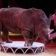 Verbod circusdieren in Catalonië nabij