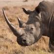 Stropers in Zuid-Afrika nauwelijks gestraft