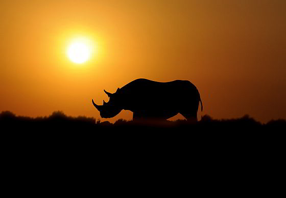 Neushoorn - Zuid-Afrika