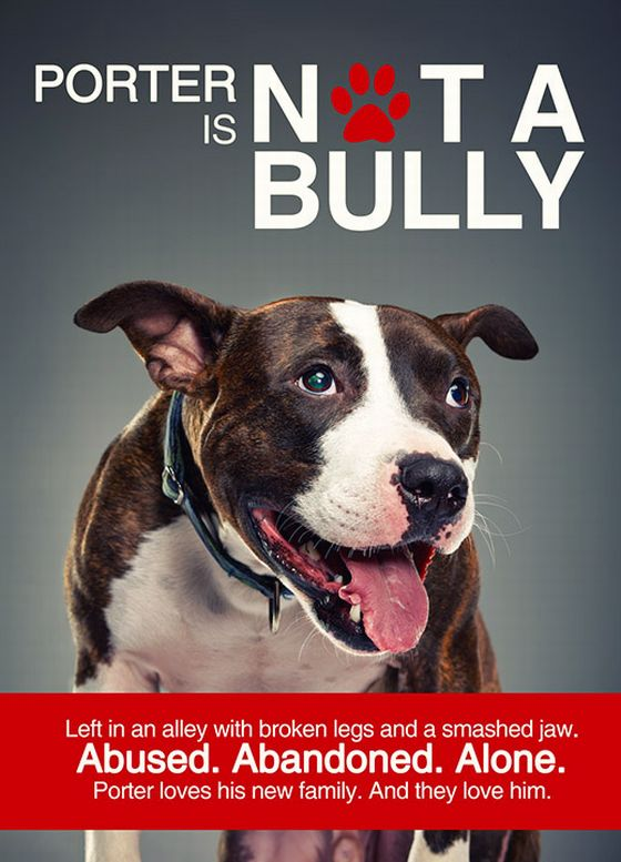 Not a Bully hond pitbull