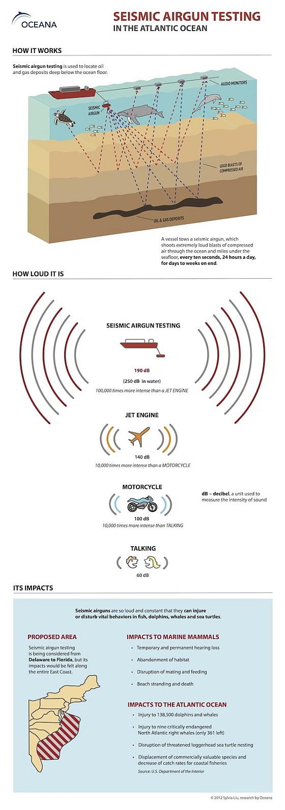 Oceana seismic airgun testing infographic - seismische explosies