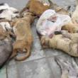 Oekraïne corruptie honden