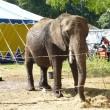 Karen's blog: Einde gesleep met olifant Buba nog niet in zicht