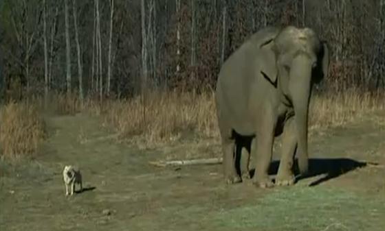 olifant en hond