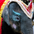 Olifant in circus