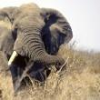 Hoorzitting Vietnam in Den Haag wegens illegale ivoorhandel