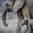 Olifanten bedreigd door stropers gaan 's nachts leven