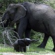 Open brief aan Obama: 'Elephants need us'