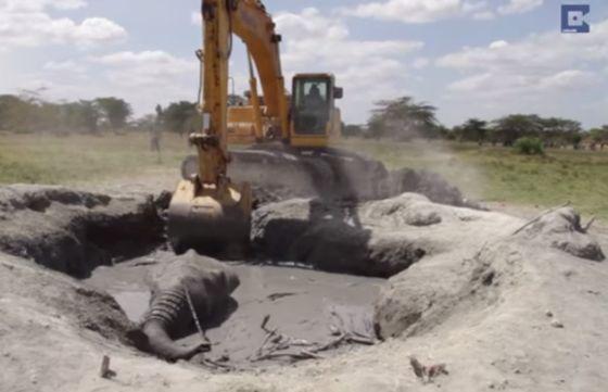 olifant in modderpoel