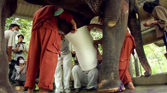 piepvandaag-olifant-prothese landmijnen