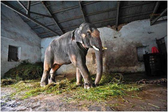 olifant Sunder