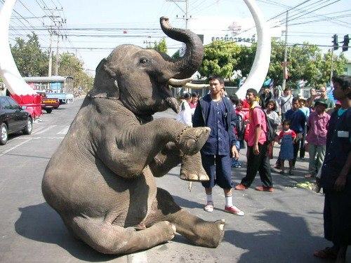 olifant zitten