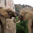Nieuw onderzoek brengt ivoorhandel in kaart